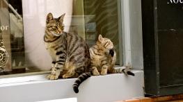 Stray Cats.