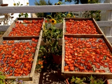 Sun-dried Tomatoes!
