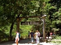 Muir Woods.