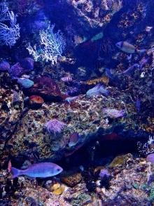 Oceanarium.