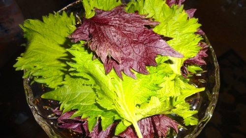 Shiso Leaves.