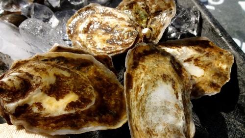 Kumamoto Oysters.