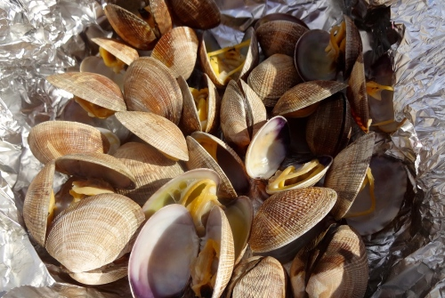Steamed Clams.