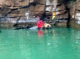 Cute Sea Otter.