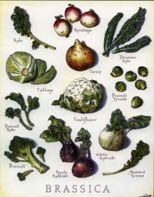 Examples of Brassica Vegetables.