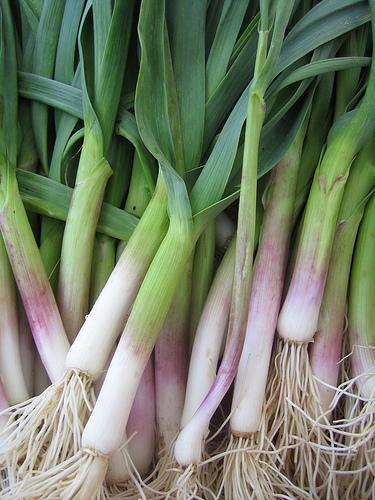 Green Garlic.