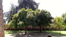 Orange Garden.