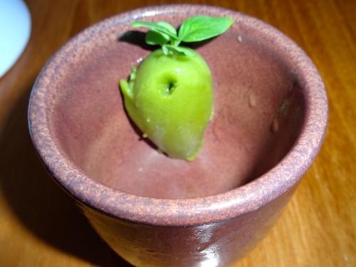 Basil Citrus Sorbet (8/10).