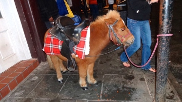 Mini Pony, Adorable.
