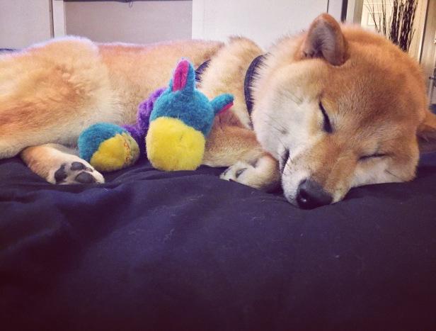 Sleepy Time.